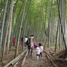 Monthly nature games at the bamboo forest